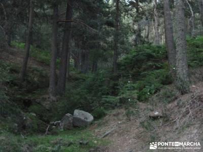 Cuerda de las Cabrillas - Senderismo en el Ocaso;arbol del tejo agencias de senderismo madrid